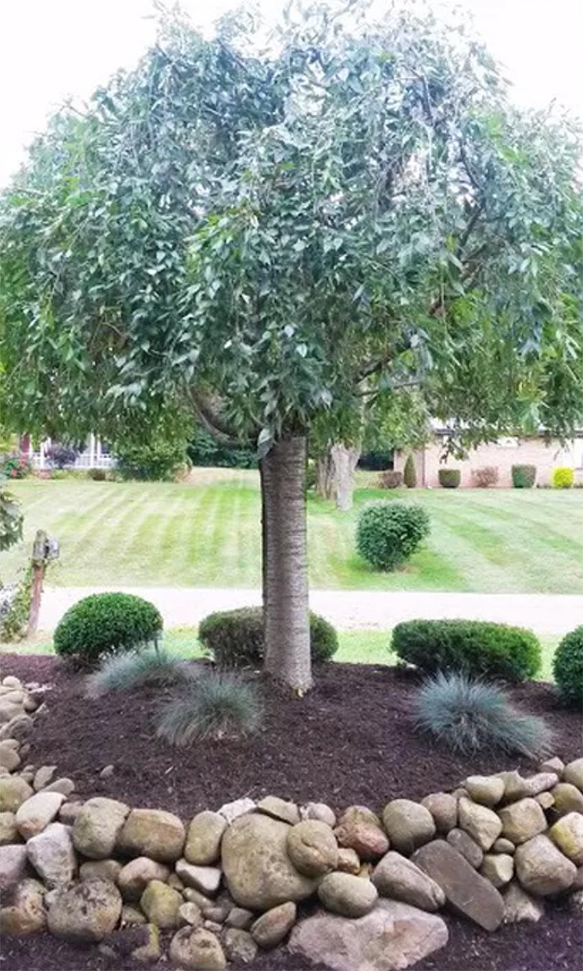 tree-services