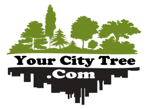 your city tree